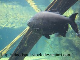 Fishes 04 by Bloodsoul-Stock