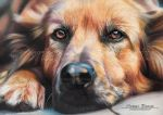 Chien by Sadness40