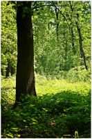 forest life 1 by wildtea