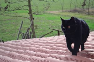 Black cat rooftop by Alecompa87