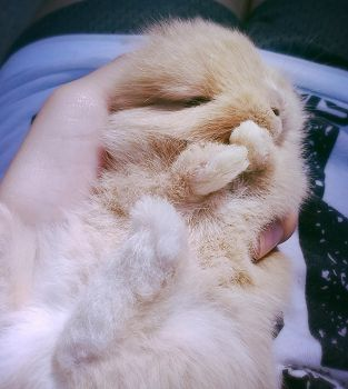 Sweet baby Bunny by EpicCatLover