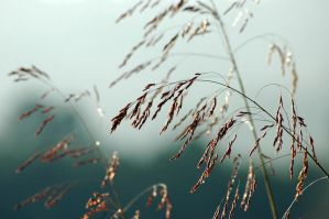 Grasses and Fog by TimLaSure