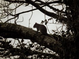 wee squirrel by harrietbaxter