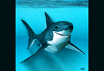 Great white shark by Arbiadesign
