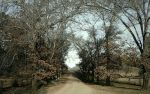 The road by Avitus12