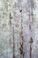 Wood natural time worn layers by paintresseye