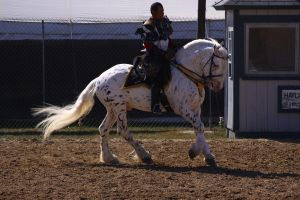 Cantering 17 by SoloPianoStock