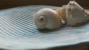 Seashells V by CorporalCat
