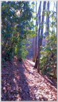 Finley Cane Trail Scenery 40 by slowdog294