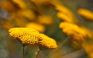 ...more yellow... by jsz