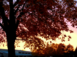 Fall 2015 - Regal Elementary - Sky Colors by Ryven