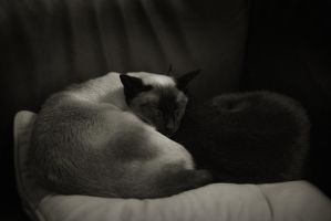 Yin and Yang by Amalphi