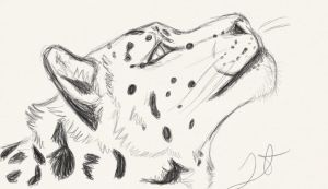 Snow Leopard sketch. by Akadafeathers