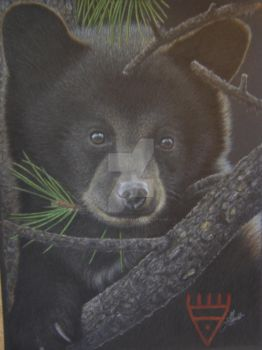 Black bear by Towinckdesigns
