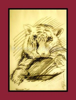 studies of tigers 06 by figlhuber