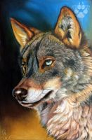 Iberian Wolf by Wolfish-Dreams