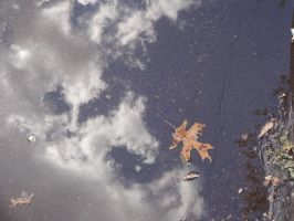 Reflections from the Leaf Pool (2) by ShadowsofHome
