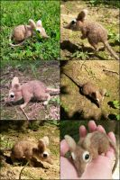 Needle Felted Elephant Shrew by SnowFox102