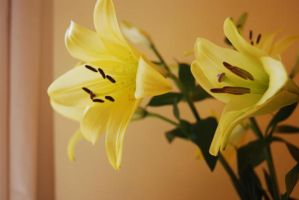 Yellow Lillies Inside by mr-macd