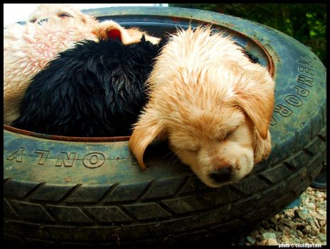 Wet and Dog Tire-D by cari