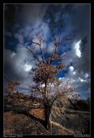 Scorched Soil by Aderet
