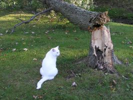 Cat with Broken Trunk 2 by loopyker-stock