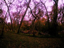 Canticle Forest by Hunter-Arkaman
