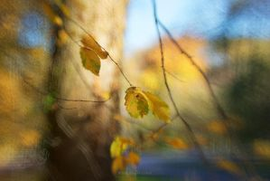 fall into november by BlauBeerKuchen