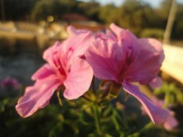 Pink flower by FireFly1800
