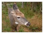 Baby Red Deer 2_Wild Life Park by rabb1t