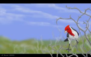 Red Crested Cardinal by Typthis