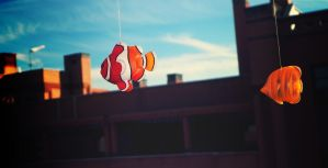 Fly, Nemo, fly away by Followmebehindthis