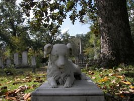Dog Grave Stone by seiyastock