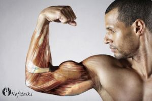 strong muscle arm by AleksandarN