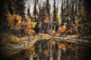 Fall Colors by skip2000