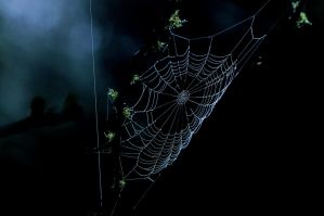 Spider webs in the mist by JSF1