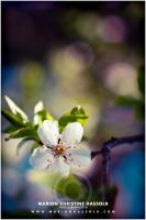 a sunny day in april by Finvara