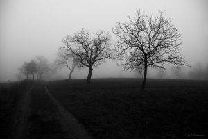Walking in fog by PavelFireman