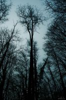 In the heart of darkness III by meshagraphy