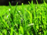 Grass So Green by searchmysoulforfire