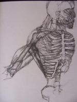 Skeleton with muscles by unknown-nobody
