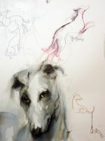 Galgos by EmegE
