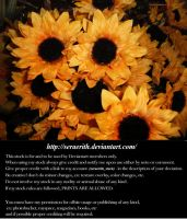 Sunflowers by Seraerith-stock