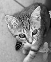 Hello, this is Kitty by SianaLee