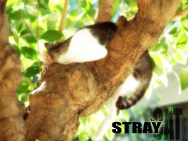 STRAY CAT by bramer