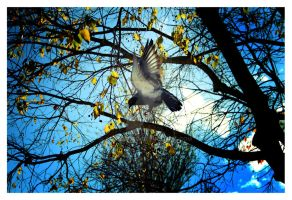 Free bird by ARTeodoro