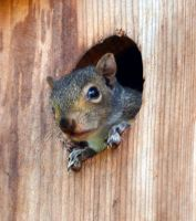Baby Squirrel II by prancingdeer722