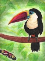 Toucan by Monkey-of-the-Dark