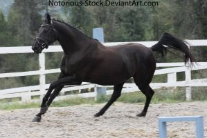 Black Mare 005 by NotoriousFlair