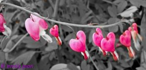 Bleeding Hearts by icrybehindsunglasses